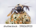 macro detail of a bee over... | Shutterstock . vector #598263923