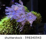 corals in the aquarium light... | Shutterstock . vector #598340543