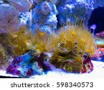 corals in the aquarium light... | Shutterstock . vector #598340573