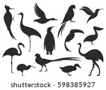 Wild Bird. Bird Silhouette
