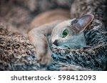 russian blue cat | Shutterstock . vector #598412093