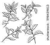 tea plant graphic black white... | Shutterstock .eps vector #598439813