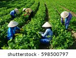 group of vietnamese woman... | Shutterstock . vector #598500797