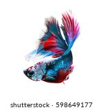 betta fish  siamese fighting... | Shutterstock . vector #598649177