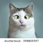 Stock photo funny cat at ophthalmologist appointmet squinting close up portrait 598805597