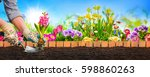planting flowers in sunny garden | Shutterstock . vector #598860263