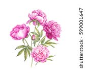 set of watercolor pink peonies. ... | Shutterstock . vector #599001647