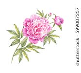 watercolor pink peonies. branch ... | Shutterstock . vector #599007257
