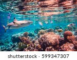 reef with a variety of hard and ... | Shutterstock . vector #599347307