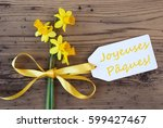 Yellow Spring Narcissus  Label...