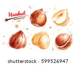 watercolor illustration of... | Shutterstock . vector #599526947