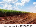 Sugarcane Plantation On Dry...