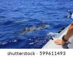 dolphins floating along the... | Shutterstock . vector #599611493