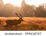 red deer in richmond park ... | Shutterstock . vector #599618747