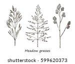 detailed botanical illustration ... | Shutterstock .eps vector #599620373