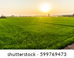green rice field on sunset at... | Shutterstock . vector #599769473