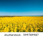 Blooming Field Of Yellow...