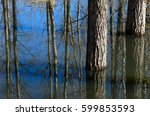 Flooded Forest Landscape With...