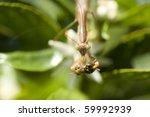 macro portrait of a california... | Shutterstock . vector #59992939