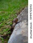 Garden Snail Negotiating...