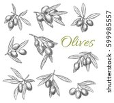 olives and olive branches... | Shutterstock .eps vector #599985557