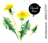hand drawn watercolor dandelion ... | Shutterstock . vector #600112757
