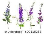 delphinium candle delphinium... | Shutterstock . vector #600115253
