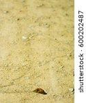 Slug Leaving Its Trail On A...