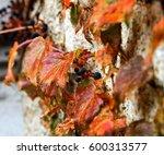 vines | Shutterstock . vector #600313577