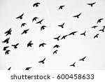 flight of birds in the wild.... | Shutterstock . vector #600458633