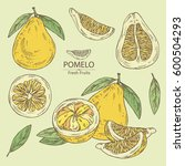 collection of pomelo and pomelo ...   Shutterstock .eps vector #600504293