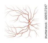 eye red veins  blood vessels... | Shutterstock . vector #600517247
