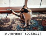 Calico Cat On A Textured Rug ...