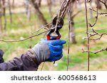 pruning of apple tree in march | Shutterstock . vector #600568613