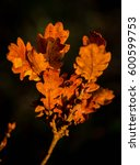Small photo of Autumn oak leaves