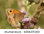 A Side View Of A Meadow Brown...
