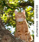 Handsome Orange Tabby Cat Up I...