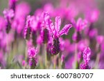 Beautiful Pink Flowers Of...