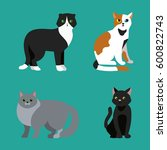 cat breed cute pet portrait... | Shutterstock .eps vector #600822743