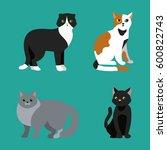 cat breed cute pet portrait... | Shutterstock .eps vector #600822743