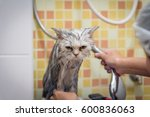 bath or shower to a persian... | Shutterstock . vector #600836063