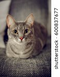 portrait of a cat. cat laying... | Shutterstock . vector #600837677