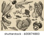 vegetable vector set hand... | Shutterstock .eps vector #600874883