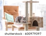 Stock photo cute funny cat and tree in room 600979397