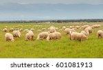 flock of sheep grazing in a... | Shutterstock . vector #601081913