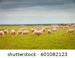 flock of sheep grazing in a... | Shutterstock . vector #601082123