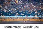 Flying Birds. Abstract Motion...