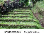 Old Mossy Stairs Covered With...