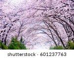 cherry blossom in spring....   Shutterstock . vector #601237763