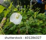 white crake flower and thai...   Shutterstock . vector #601286327